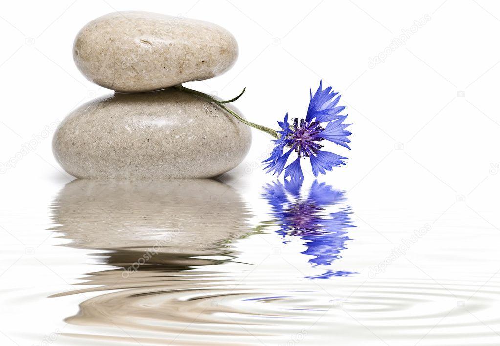 Zen balance with wild flowers 5.