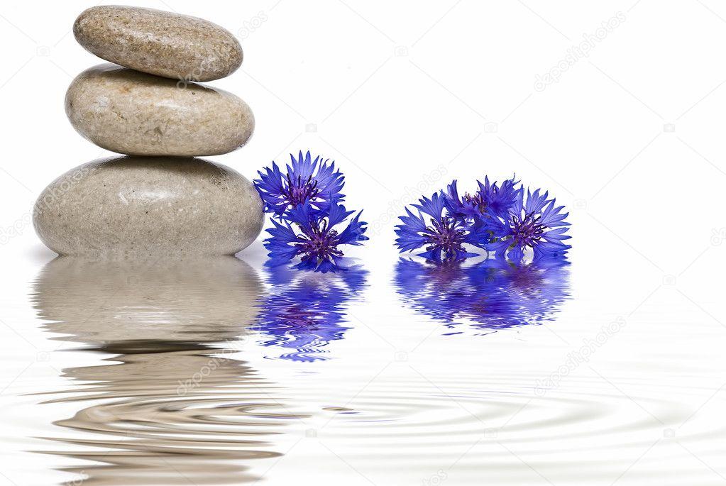 Zen balance with wild flowers 4.