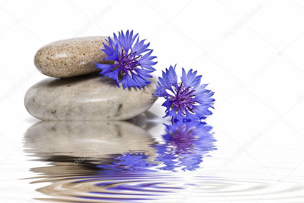 Zen balance with wild flowers.