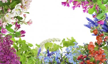 Spring May flowers mix