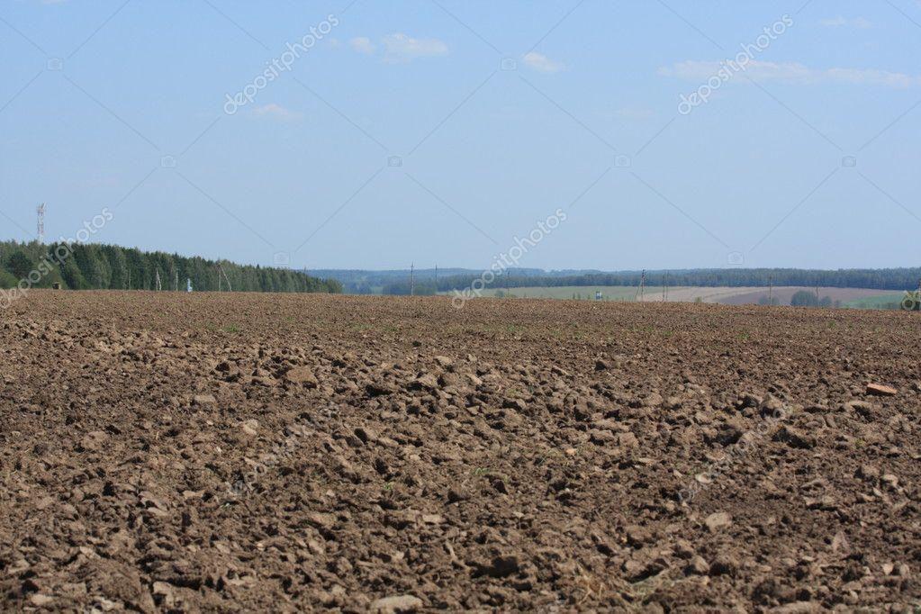 Russian field.