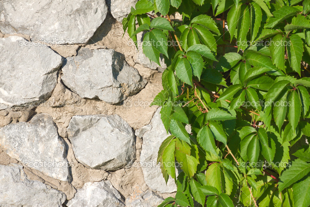 Hop on stone wall