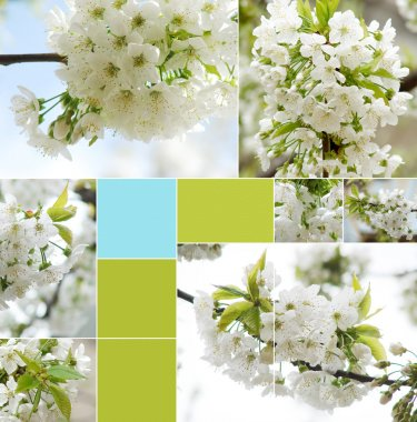 Collage of beautiful white spring flower
