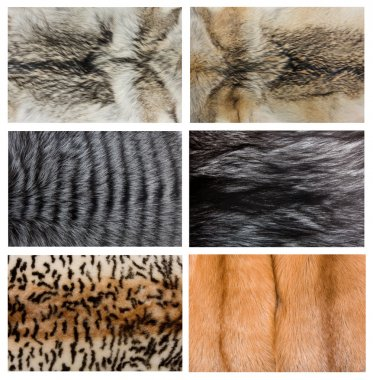 Closeup of beautiful fox wolf mink fur