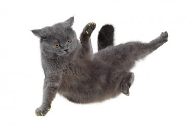British cat dancing breakdance