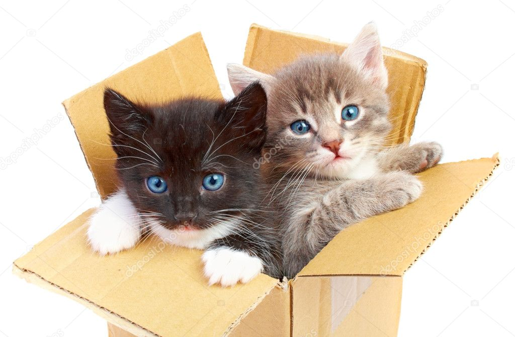 Kittens in box