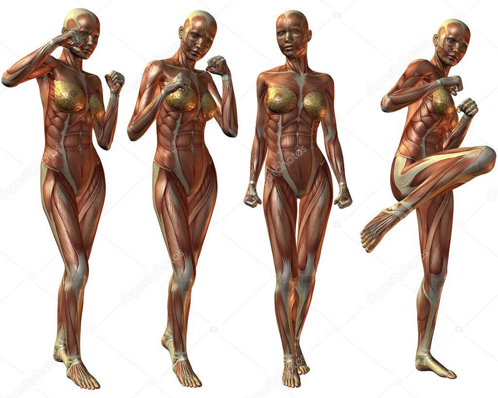Anatomía del cuerpo humano femenino — Foto de stock © Digitalstudio ...