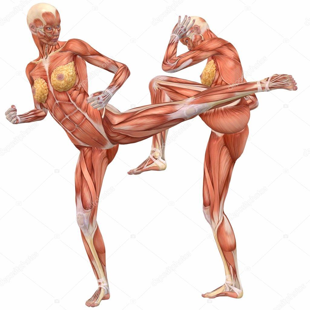 vrouwelijke menselijk lichaam anatomie-straat strijd — Stockfoto ...