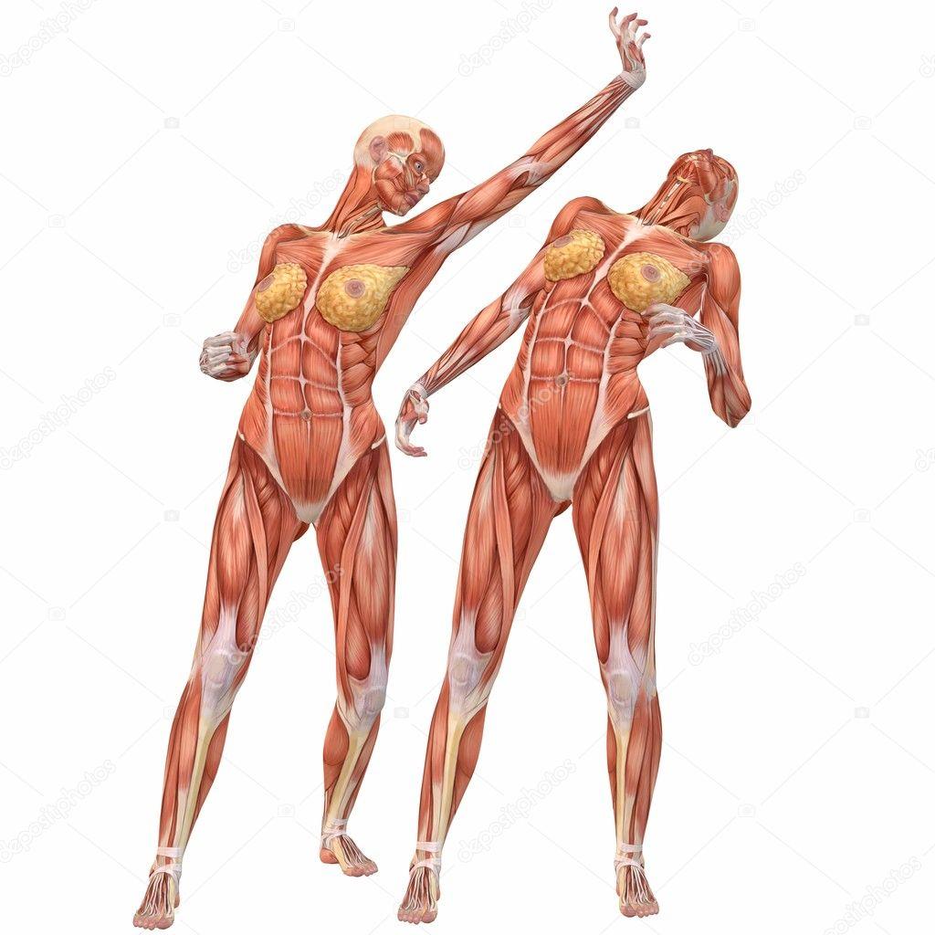 lucha femenina cuerpo humano Anatomía-calle — Foto de stock ...