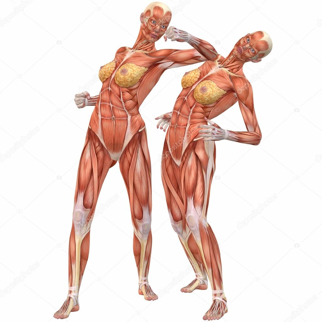 Female Human Body Anatomy-Street Fight — Stock Photo © Digitalstudio ...