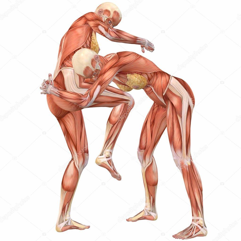 weibliche menschliche Körper-Anatomie-Straße-Kampf — Stockfoto ...