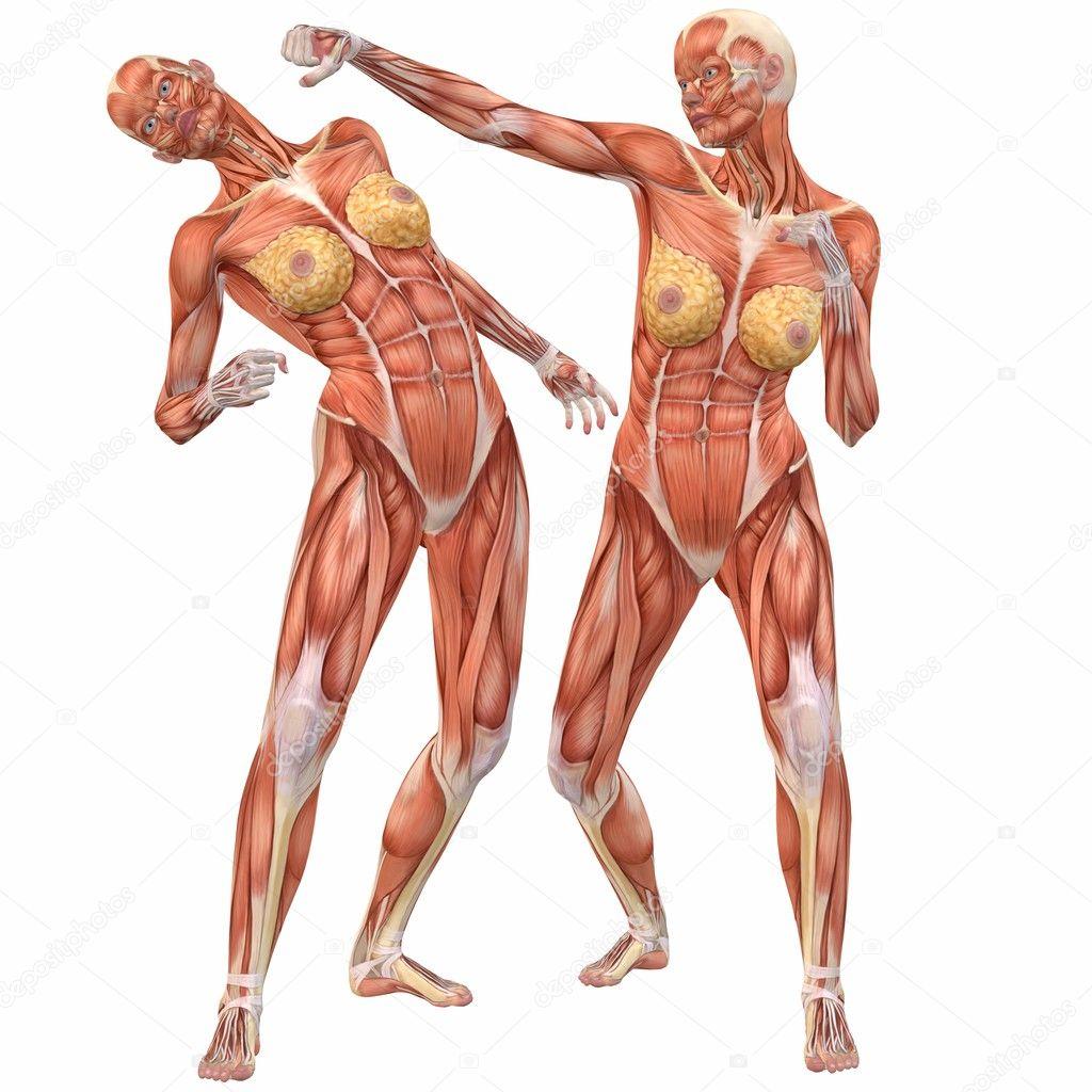 lucha femenina cuerpo humano Anatomía-calle — Fotos de Stock ...