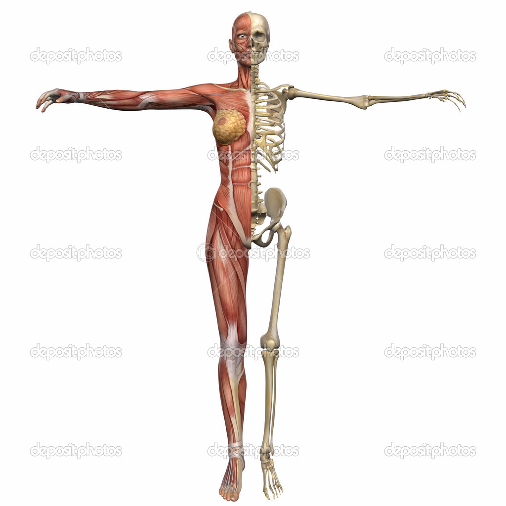 Женское тело видео анатомия фото 191-9