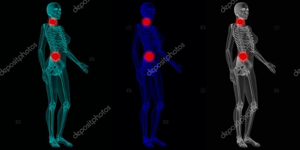 Ausgezeichnet Anatomie Mädchen Körper Ideen - Anatomie und ...