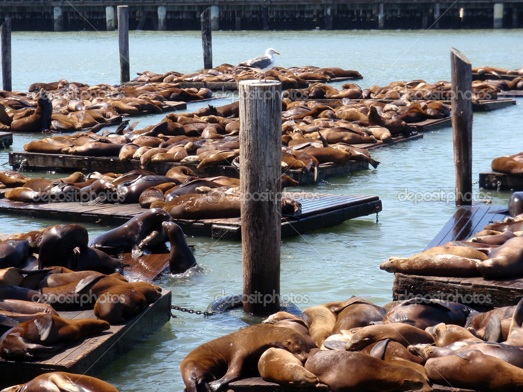Bird watches over seals at Pier 39