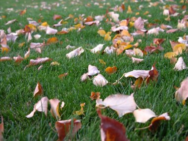 Autumn - Leaves on the lawn
