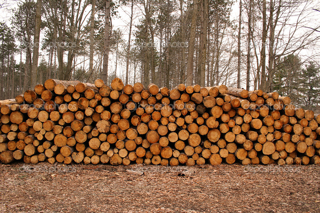 Wood log pile background