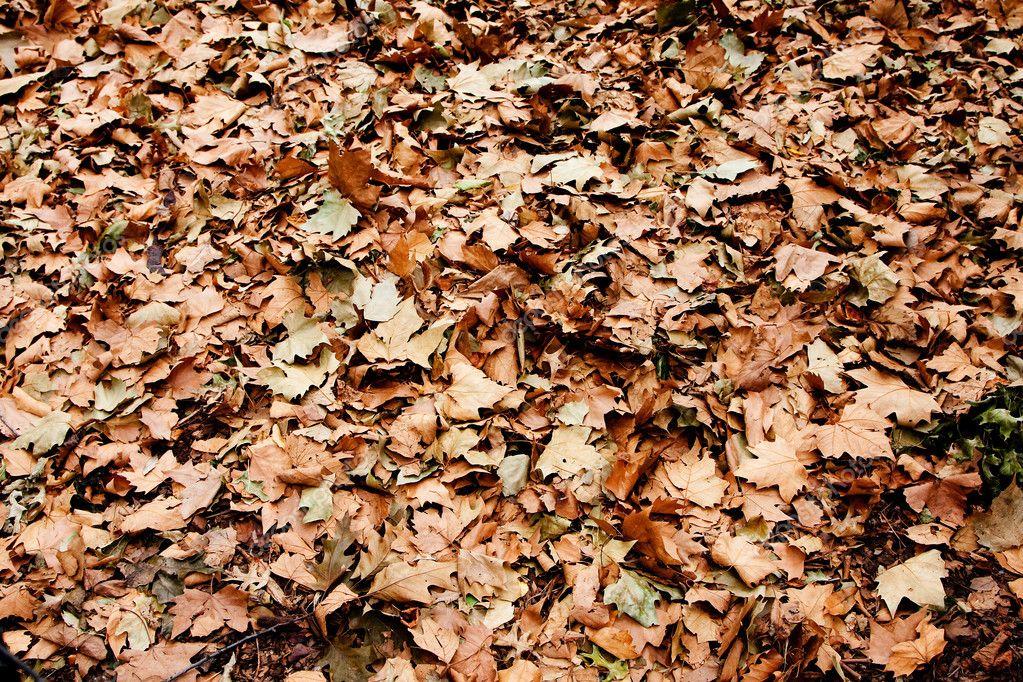 Dry brown leaves on ground