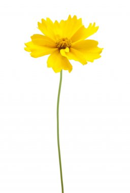 A yellow flower with a stem