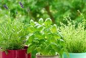 Fotografie Home herb`s garden