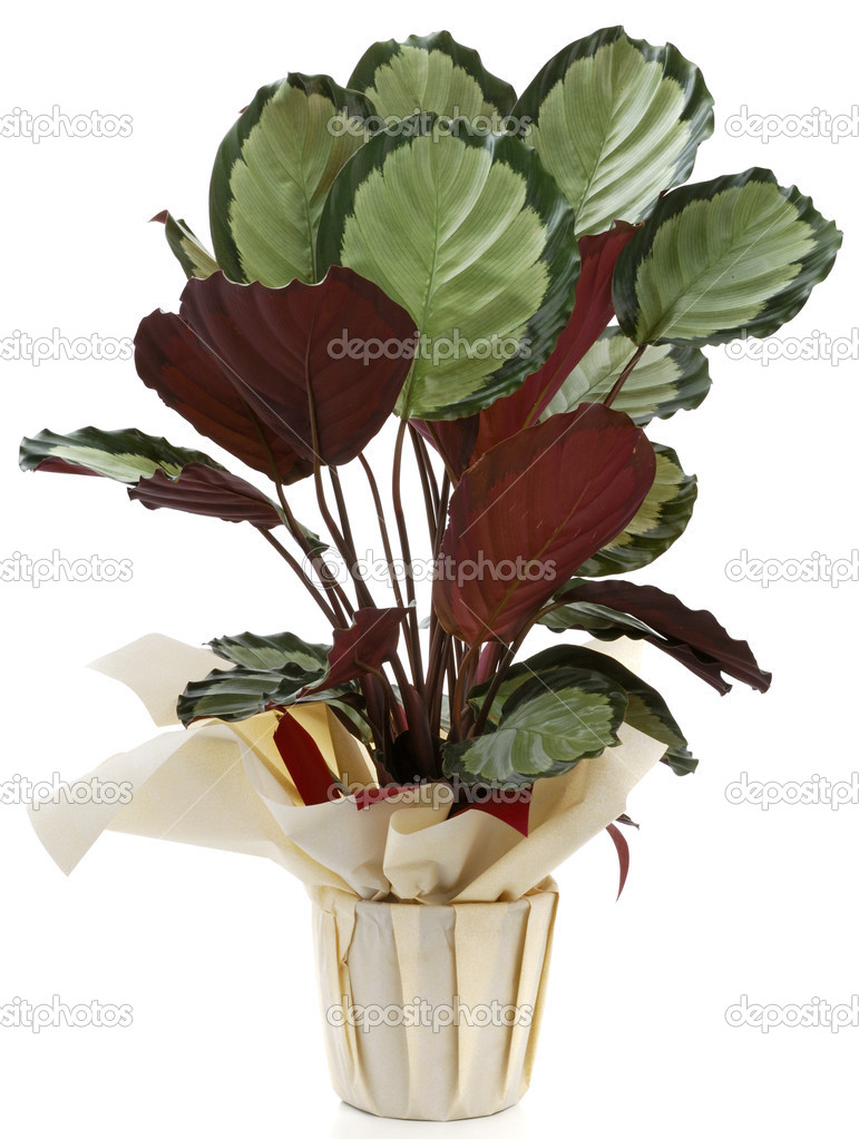 Plantas ornamentales foto de stock pepbaix 3051591 for 6 plantas ornamentales