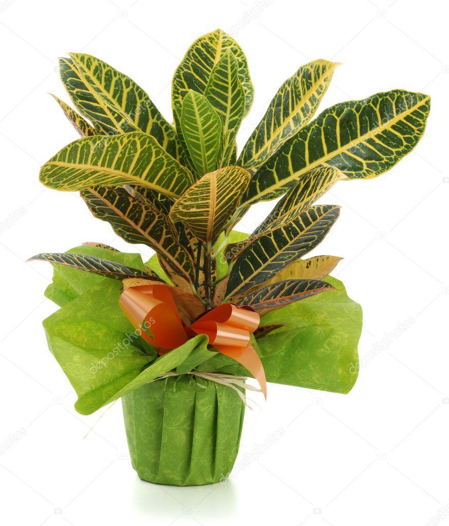 Plantas ornamentales fotos de stock pepbaix 3051641 for 2 plantas ornamentales