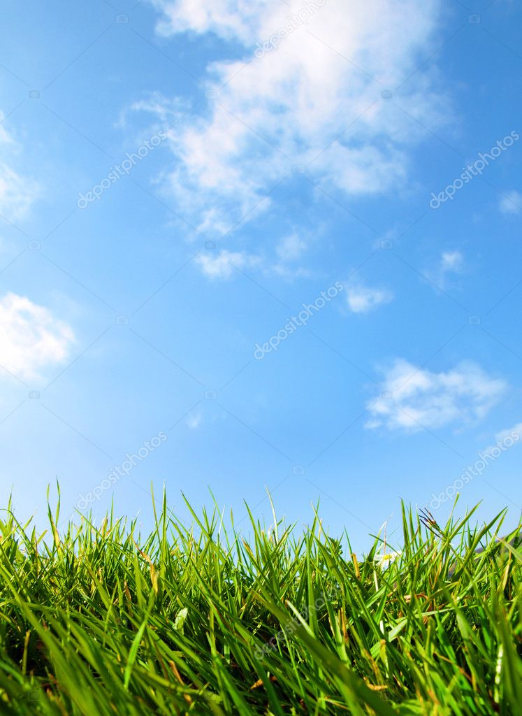 Close Up Grass and Bright Blue Sky