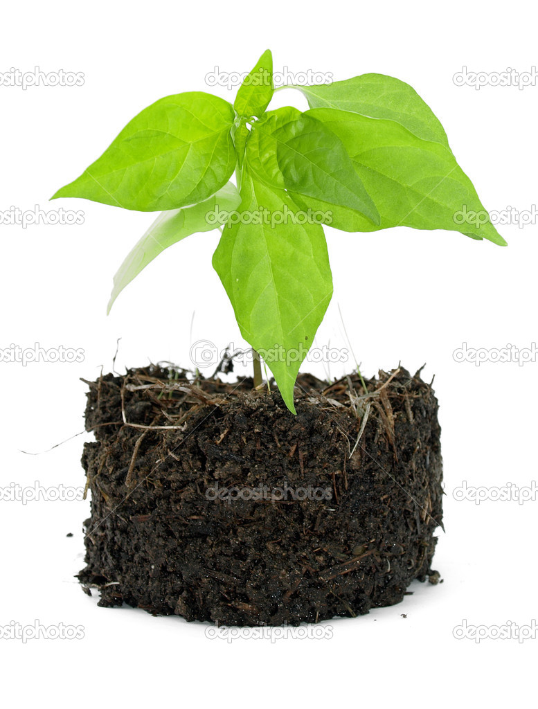 Pot plant with its compost