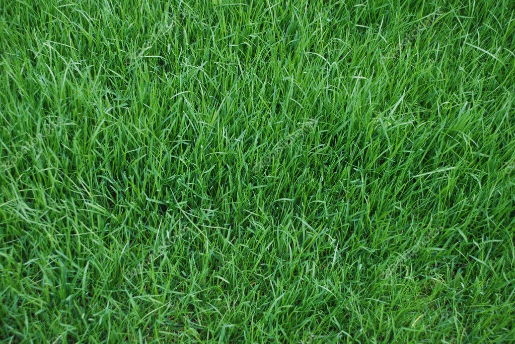 Lawn, background