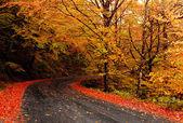 Fotografie podzimní krajina