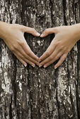 Fotografia salvando la nostra foresta