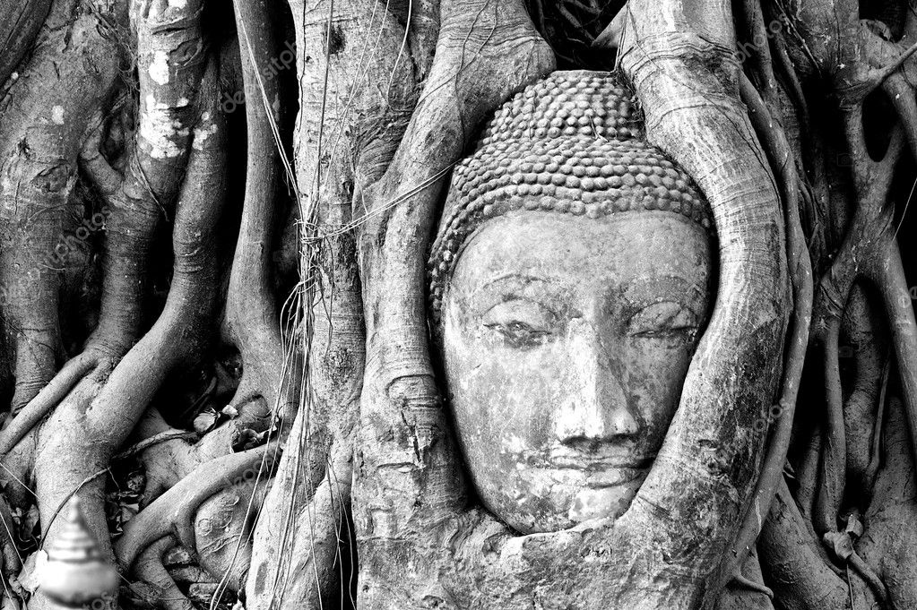 Buddha's head stuck in tree roots