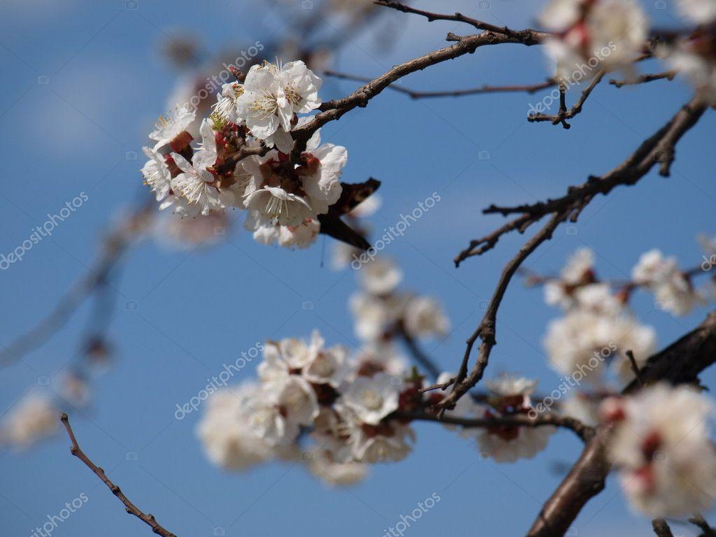 Butterfly on a flowering tree