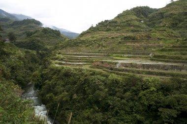 Ifugao rice terraces luzon