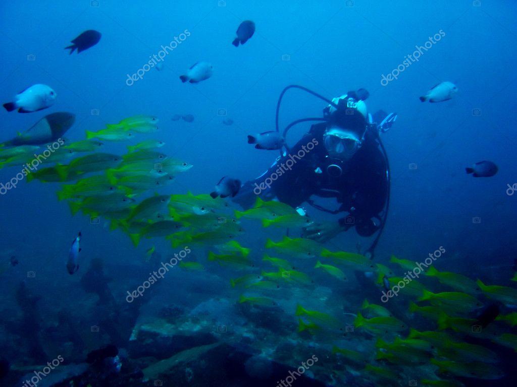 Aquarium diver