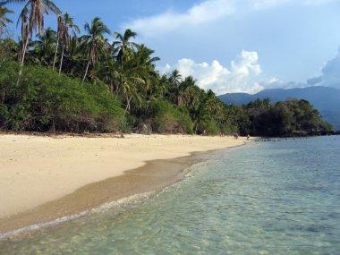 tropical beach jungle  puerto galera mindoro in the philippines