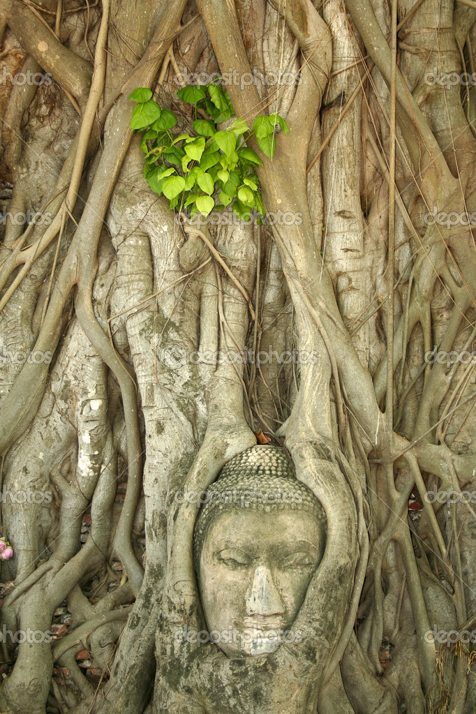 buddhas head in tree roots, Wat Mahathat temple, Ayutthaya