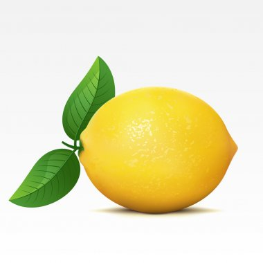 Lemon on a white background stock vector