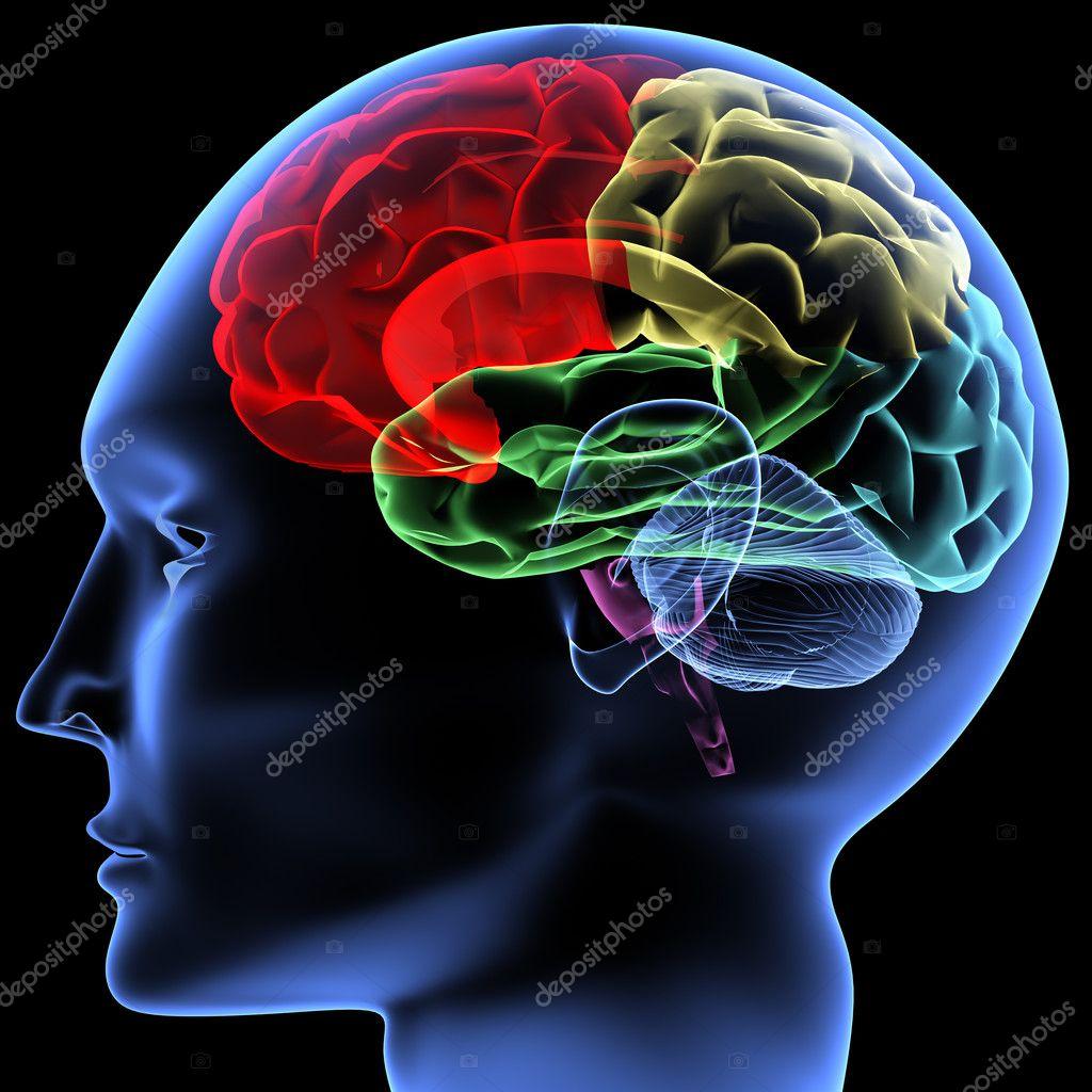 Epilepsia lobulo temporal pdf download