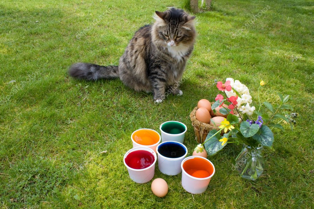 Coloring Eggs - Cat Watching