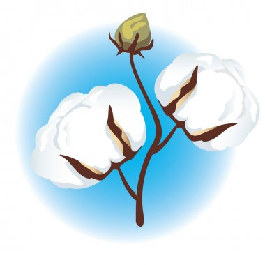 Cotton branch.