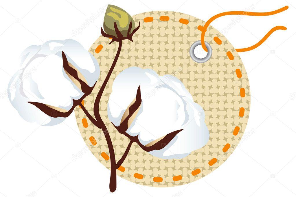 Cotton branch with label (Gossypium).