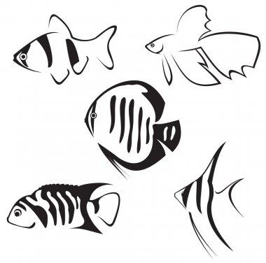 Aquarium fish. Line drawing.