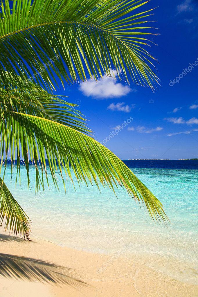 Фотообои Tropical Paradise at Maldives