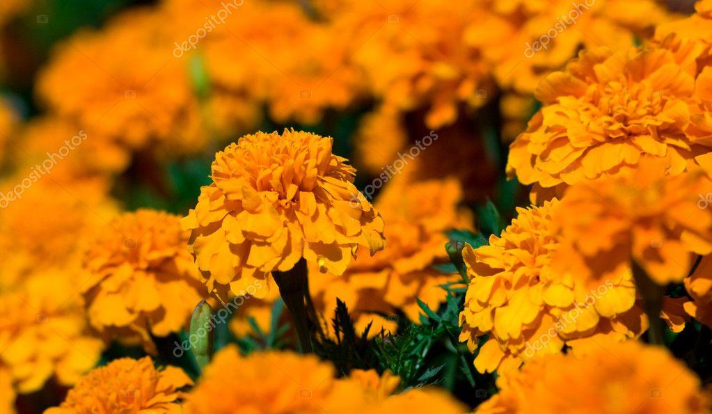 Imágenes Flores Naturales Bonitas Verry Bonitas Flores