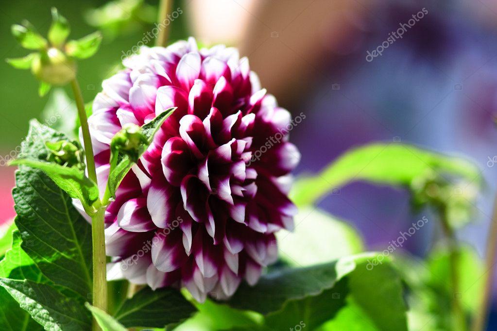 Imágenes Bonitas De Flores Naturales Verry Bonitas Flores