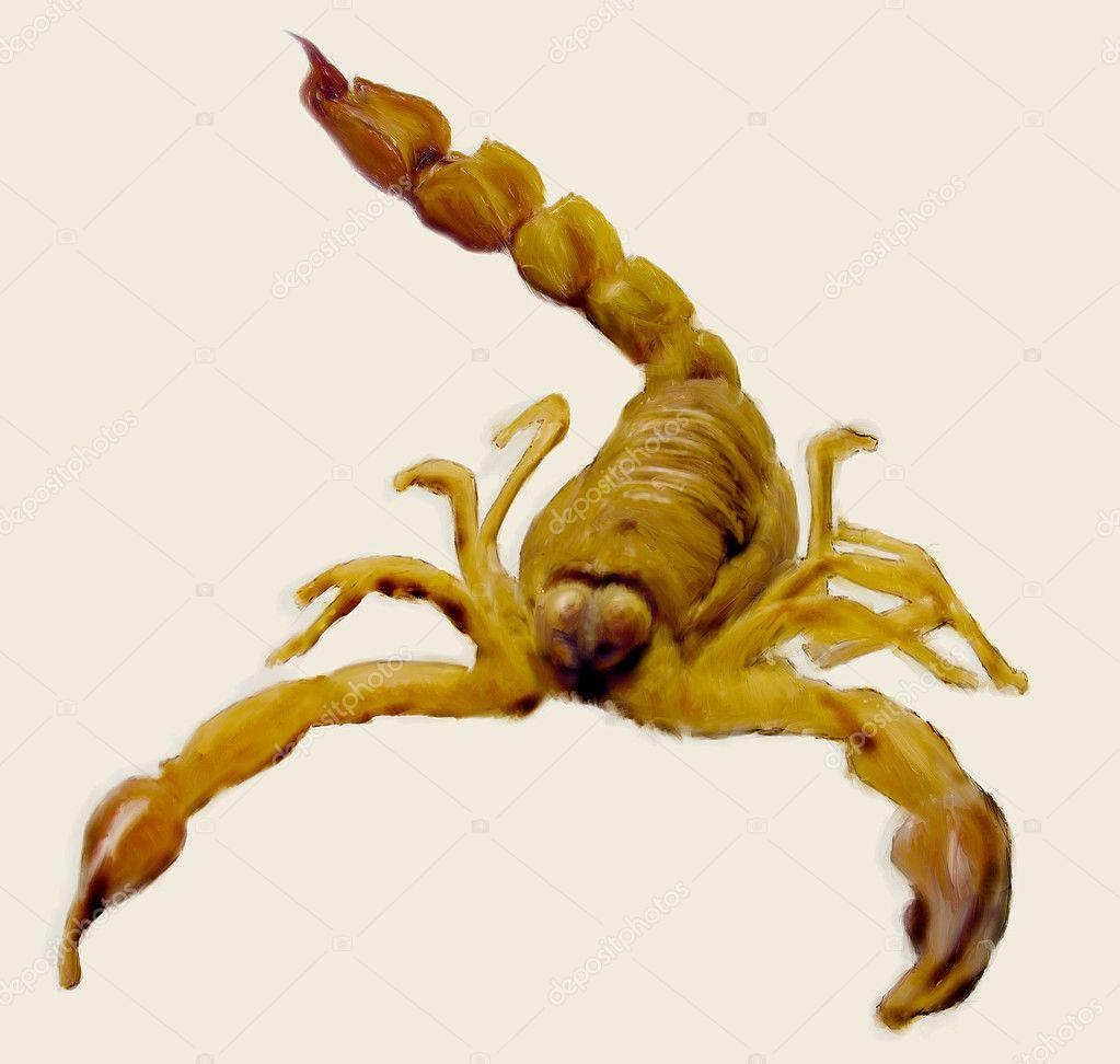 Escorpión — Fotos de Stock © homydesign #2896022