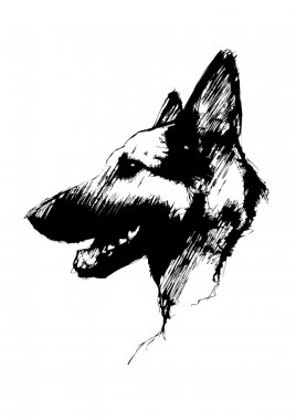 Alsatian dog