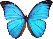 Fotografie modrý motýl