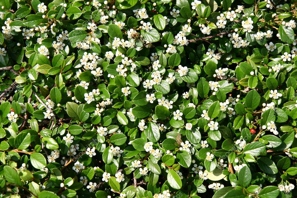 Small white flowers background stock photo teine26 3262500 small white flowers background stock photo mightylinksfo